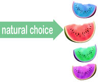 Watermelon slice, no GMO choice concept. Modified colors of fruit flesh. Vector illustration eco selection. Royalty Free Stock Photos