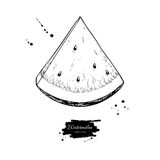 Watermelon slice vector drawing. Isolated hand drawn berry on wh royalty free illustration