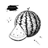 Watermelon and slice vector drawing. Isolated hand drawn berry stock illustration