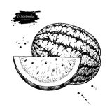 Watermelon and slice vector drawing. Isolated hand drawn berry vector illustration