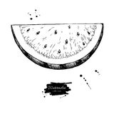 Watermelon slice vector drawing. Isolated hand drawn berry on white vector illustration