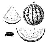 Watermelon and slice vector drawing set. Isolated hand drawn berry on white background. Royalty Free Stock Images