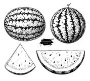Watermelon and slice vector drawing set. Isolated hand drawn berry on white background. Summer fruit engraved style Royalty Free Stock Photography