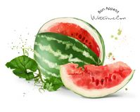 Watermelon and splashes royalty free illustration