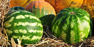 Watermelon on straw. Two watermelons on straw near pumkins royalty free stock photo