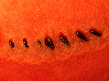 Watermelon texture. Close up ripe watermelon fruit texture stock images