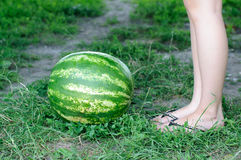 Watermelon is on the trail Royalty Free Stock Photography