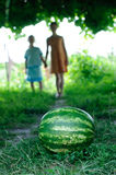 Watermelon is on the trail Royalty Free Stock Photo