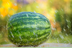 Watermelon under drops of water Royalty Free Stock Image