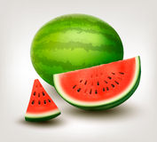Watermelon. Vector Royalty Free Stock Images
