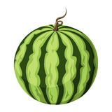Watermelon. Vector illustration. Stock Photo