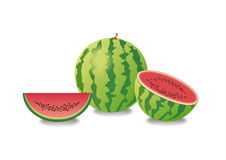 Watermelon vector illustration. White background with watermelon. Still life with watermelon. Juicy fruit illustration Royalty Free Stock Images