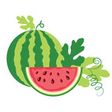 Watermelon on white background Stock Images