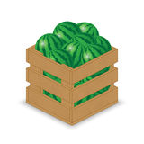 Watermelon in wooden crate. On white background stock illustration