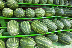 Watermelons Royalty Free Stock Image