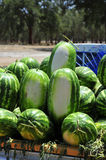 Watermelons. Sold by the road in Morocco Stock Photos