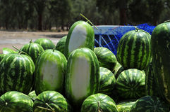 Watermelons. Sold by the road in Morocco Stock Images