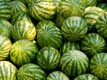 Watermelons. Pile of watermelons in the sunshine Royalty Free Stock Photography