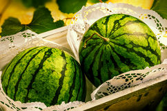 Watermelons in decorative box. Watermelons in decorative wooden box in garden Royalty Free Stock Photography