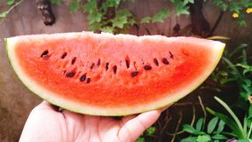 Sweet red watermelon stock image
