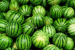 Watermelons many Royalty Free Stock Photo