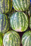 Watermelons in the market. Royalty Free Stock Photography