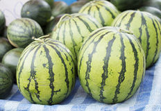 Watermelons at Market, watermelons laid out at a Farmers market Royalty Free Stock Image
