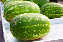 Watermelons in a marketplace in a row Stock Photos