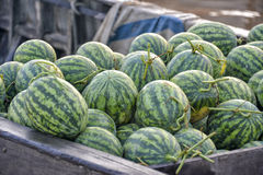 Watermelons in Mekong Delta Royalty Free Stock Images