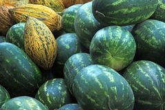 Watermelons and  melons Royalty Free Stock Photography