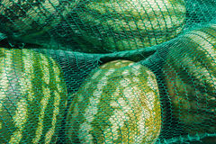 Watermelons in the netting Royalty Free Stock Photos