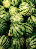Watermelons. Pack of some organic watermelons stock photos