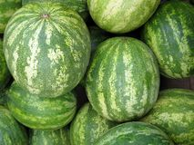 Watermelons. A pile of icebox watermelons, freshly picked stock images