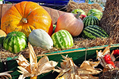 Watermelons and pumpkins Royalty Free Stock Photo