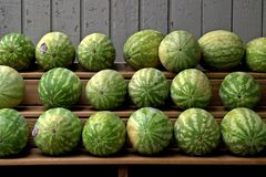 Watermelons For sale. Shelves of watermelons outside the grocery store stock image