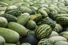 Watermelons for sale Stock Photography