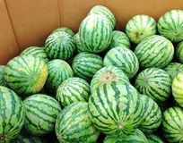 Watermelons For Sale Stock Photo