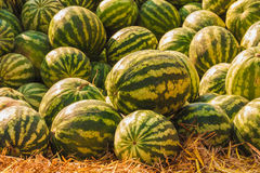 Watermelons were piled up Stock Images