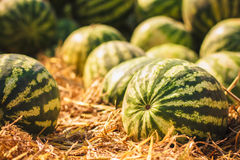 Watermelons were piled up Stock Photos