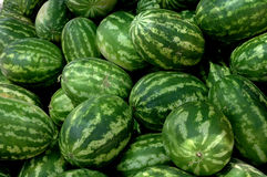 Watermelons1 Stock Images