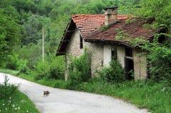 Watermill abandonado y gatito Imagen de archivo libre de regalías