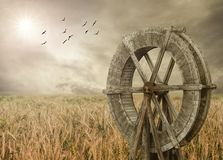 Watermill and Wheat farm. Rural landscape with birds Stock Images