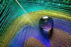 Waterparel op een pauwveer Stock Afbeeldingen