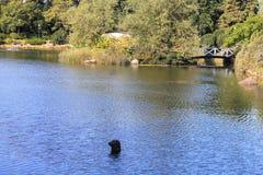 Waterpark在科特卡 库存照片