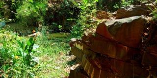 Waterpark met de mooie vijver van de rotsenbloemen van het installaties groene milieu aantrekkelijke stock fotografie