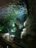 Waterpark sharks museum Lithuania megashow stock photos