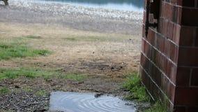 Waterpipes gotejantes na parede de tijolo filme