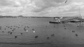 Waterplane al taupo del lago Fotografia Stock Libera da Diritti
