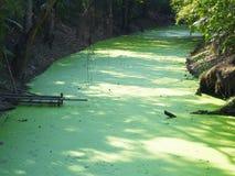 Waterplant和河 免版税库存照片