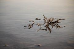 Waterplant royalty-vrije stock afbeeldingen